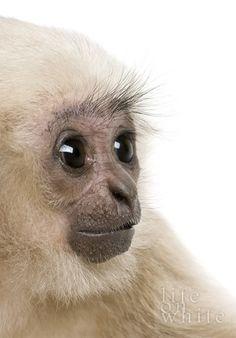 Cute Animals by Delia