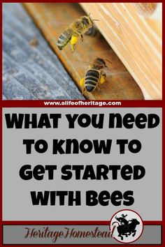 Bees   How to Bees   Starting with Bees   Are you ready to get started with bees but not really knowing how or where to begin? Follow these 10 helpful tips to getting started with bees!