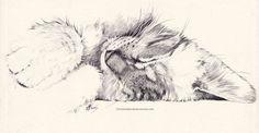 Siberian cat...