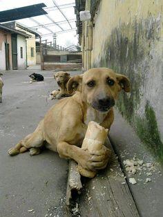 They are the best company for people. Street dogs.  Ellos son la mejor compañía para las personas. Perros callejeros.