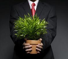 6 leczniczych roślin, które powinny znaleźć się w każdym domu