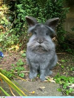 Old Man Rabbit is very wise.  Ok this   bunny makes me miss my ol' bunny Peter.