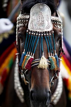 A horse is decorated during the Alka competition in the town of Sinj