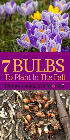 7 Bulbs To Plant in The Fall for Mind Blowing Flowers Next Spring!