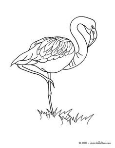 Flamingo picture coloring page