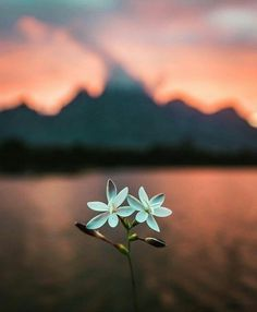 (notitle) The post appeared first on Fotografie. Stars Wallpaper, Flower Wallpaper, Flower Backgrounds, Wallpaper Backgrounds, Imagen Natural, Cactus E Suculentas, Miniature Photography, Pretty Wallpapers, Flowers Nature