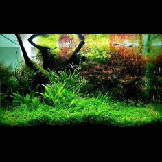 Whats your favourite fish for a planted tank?  Jose Manuel Oliva Marco
