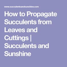 How to Propagate Succulents from Leaves and Cuttings | Succulents and Sunshine