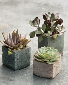 Milk cartons used as molds create cube-shaped hypertufa vessels, each sized for a single succulent. The tint variations are achieved by mixing in masonry stains.