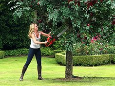Emma cutting down the apple tree from Once Upon A Time--the best fairy tale ever.