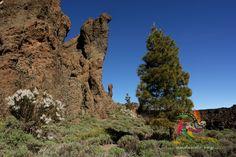 Teide Nacional Park #Teide #hikingtenerife #hiking #trekking #landscape #outdoors #trekkingtenerife #senderismotenerife #Tenerife  #fotostenerife   #tenerifesenderos #senderismo #skylovers #naturlovers #IslasCanarias