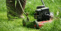 Regelmäßiges Mähen hält den Rasen in Form und sorgt für eine dichte Grasnarbe. Doch wohin mit dem Rasenschnitt? Statt ihn in die Biotonne zu geben, können Sie ihn auch sinnvoll im Garten verwerten und in wertvollen Kompost oder Mulchmaterial verwandeln.