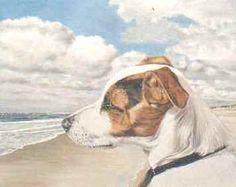 Derekje Dogs, Animals, Animales, Animaux, Pet Dogs, Doggies, Animal, Animais