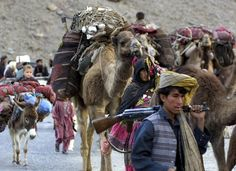 Afghan nomads are on their way to Afghanistan as summer approaches in Pakistan