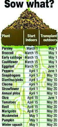 Oversikt over når man bør begynne å plante