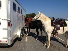 Taking two horses to the beach/Stonehouse farm Maine.