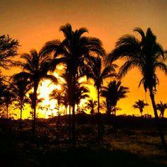 I Liked this Instagram: #sunsetlovers #sun #sunset #lovesunset #naturelovers #naturelover #naturaleza #natureporn  #sol  #colorful #instaphoto #palmtree  #beautifulnature #pordosol #instasunsets #afternoon #instagood #instadaily #instalike #igdaily #sunsets #beautiful #nature #picoftheday #beauty #brasil #brazilian #thanksgod #photooftheday #harmonia_com_o_universo by dorasantos8