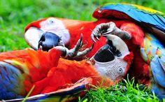 Resultado de imagem para aves mais lindas do mundo