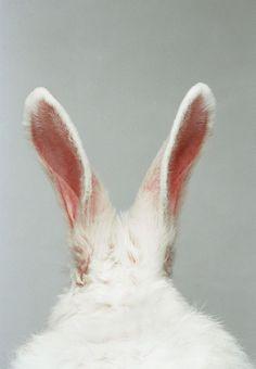 p i n t e r e s t: love, dai ♡ // The White Rabbit // Wonderland // Aesthetic Rabbit Ears, Bunny Rabbit, Rabbit Hole, Pink Rabbit, Easter Story For Kids, Benny And Joon, Easter History, Animal Original, Alice In Wonderland Aesthetic