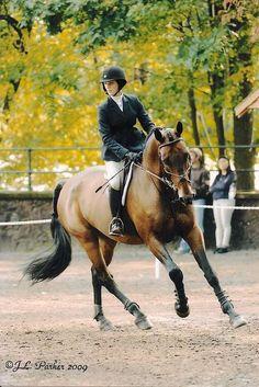 perfect equitation turnout #equitation #janssaud #centrejanssaud