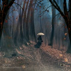 Magic of a late autumn by carasionut