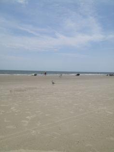Folly Field Beach Beach Vacations, Beaches, Warm, Travel, Outdoor, Outdoors, Viajes, Sands, Destinations