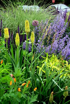 """Thoughts about our garden. """"We desire,"""" the Emporer dictated, """"that in the garden there should be all kinds of plants."""" Charlemagne t..."""