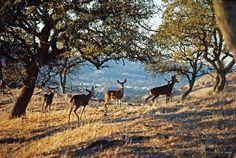 Bob Walker, Diablo Foothills S93.15.14170 | OMCA COLLECTIONS