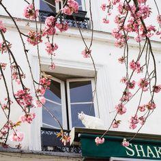 A gorgeous photo walk through a bookstore in Paris, yes please!