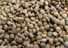 ginseng seed