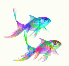 colorful fish by ww3billard, via Flickr