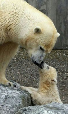 A Kiss For Mom!