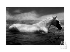White Horse Swimming Photographic Print by Tim Lynch at Art.com