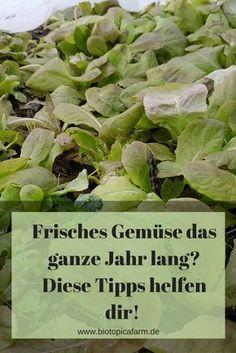 Im Winter ist im Garten nix los? Falsch gedacht! So versorgst du dich ganze Jahr mit frischen Gemüse.