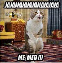 Gato http://www.gorditosenlucha.com/