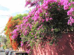 Funchal: Blütenpracht im Januar