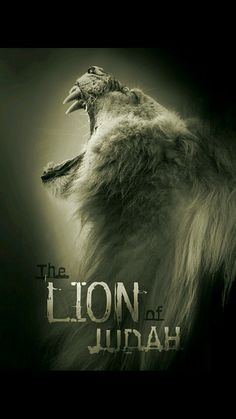 Lion of Judah....Yes that is what He is. This is so amazing.