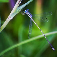 Beautiful dragonfly.