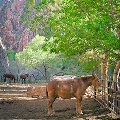 Best use of mules: Phantom Ranch, Grand Canyon