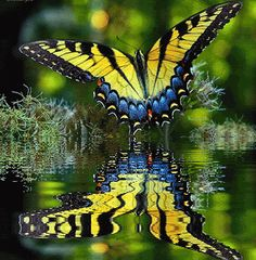 Breathtaking! My garden has gorgeous butterflies but not a pond to reflect like that. Wow.