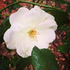#instaflower #italy #photooftheday #amore #foto #instamoment #instapic #loveyou #beautiful #nature #like #vscocam