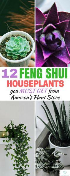Feng Shui Houseplants #fengshui #houseplants