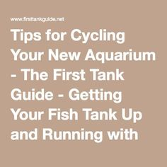 Tips for Cycling Your New Aquarium - The First Tank Guide - Getting Your Fish Tank Up and Running with Minimal Headaches