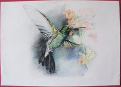 koliber akwarela