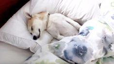 病院を嫌がり死んだふりをする犬 「おやつあるよ」と言った途端、、笑