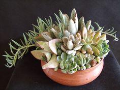 Succulents in terra cotta. Photo/Designer Laura Eubanks at Design For Serenity.