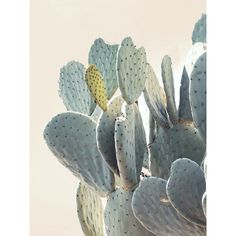 """Bring some gorgeous desert vibes into your home with this cacti print. 4"""" x 6"""" or 8"""" x 10"""" available. Wilder California. Photographed and hand-printed in California, USA. * This item does not come framed."""
