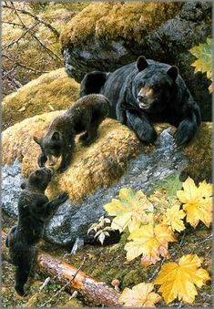 black bear and her cubs