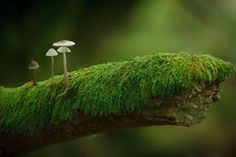 Out on a Limb by James  Wallace on 500px