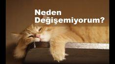 Neden Kendimi Değiştiremiyorum? - YouTube Cats, Youtube, Animals, Gatos, Animales, Animaux, Animal, Cat, Animais